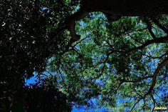 """Olhares do avesso: destros """"e os dedos apontam culpados em todas as direções  turistas nativos no espelho das divagações girando em pé olham abobados para onde deveriam ir e não vão, presos nos vãos maré de gente se achando esperta mas tão inocente recebendo cafuné"""" """"and the fingers point blame in all directions   Native tourists in the mirror of ramblings spinning standing They look vaulted to where they should go and will not stuck in vain We tide is finding smart yet so innocent receiving"""