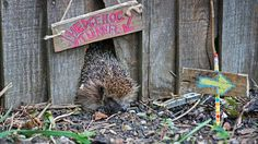 Help us tackle the wildlife housing crisis by building a home for nature #homesfornature Photo by Eleanor Bentall (rspb-images.com)