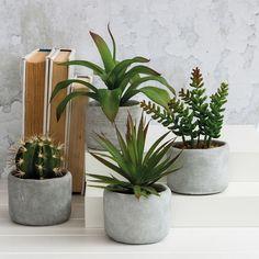 Aldama Potted Plant | Pillow Talk $9.95 each