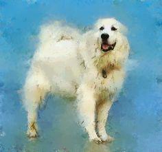 Free Artwork For Personal Use | Joedigital Free Artwork, Art Photography, Animals, Fine Art Photography, Animales, Animaux, Animal, Animais, Artistic Photography