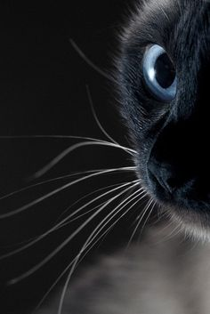 ....#photography #cats