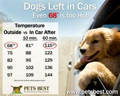Dogs left in hot cars can suffer serious or fatal injuries. This chart gives temperature ranges for how quickly it can heat up inside your c...