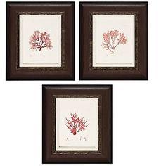 """Nature's Coral Set of 3 Framed Prints 17"""" X 20"""" at HSN.com."""
