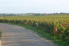 La route des Grands Crus de Bourgogne | Trendy Escapes