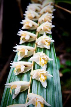 Borneo flowers. To book go to www.notjusttravel.com/anglia