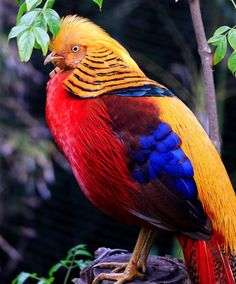 Participate in the Colorful Birds Photo Contest for a chance to win prizes and give exposure to your photography. Join over 300 photo contests per year and browse a huge selection of photos. Different Birds, Kinds Of Birds, Exotic Birds, Colorful Birds, Golden Pheasant, Dove Bird, Photo Contest, Bird Feathers, Beautiful Birds
