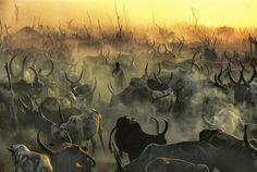 Impresionantes fotos de una tribu africana. Su principal actividad económica es la ganadería.