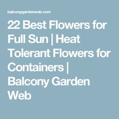 22 Best Flowers for Full Sun | Heat Tolerant Flowers for Containers | Balcony Garden Web