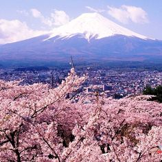 Tokyo, Japan during thee Cherry Blossom festival