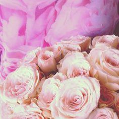 Roses from Sammy