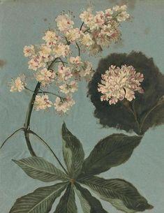 Plant studies by Pancrace Bessa (1772-1846)