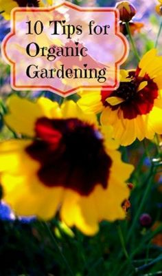 10 Tips for Organic Gardening - love this DIY guide for an eco-friendly garden.