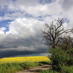 Sonne Wolken Sonne Wolken... #Jena #aprilwetter #im #mai #outofthephone #iphone #lichtundschatten #jenaparadies #wünscht #einen #schönen #tag