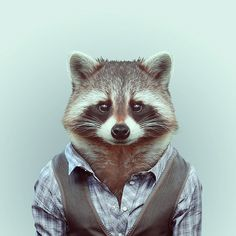 Raton laveur et bosseur. Zoo Animals : des animaux habillés pour les photographes.