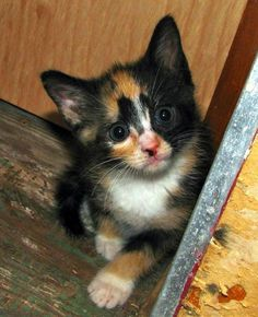 """""""Cats may walk by themselves, but sometimes they need our support."""" --Nicholas Dodman"""