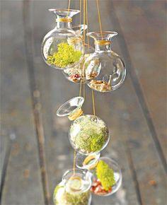 mini terrarium garden.  love.