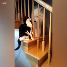 get rekt just out Funny dogs Funny Animal Memes, Cute Funny Animals, Funny Animal Pictures, Cute Baby Animals, Animals And Pets, Cute Cats, Cute Animal Videos, Funny Cats And Dogs, Animals Beautiful