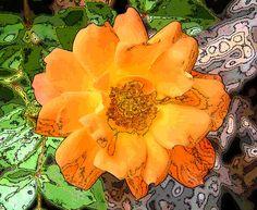 Orange Rose Doodle by Mary Sedivy.