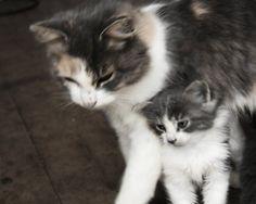 Momma and her kitten