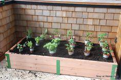 plant layout in diy patio garden http://www.stayathomeista.com/2012/04/diy-patio-garden.html