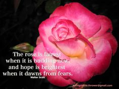 The rose is fairest when it is budding new,  and hope is brightest when it dawns from fears.  Walter Scott