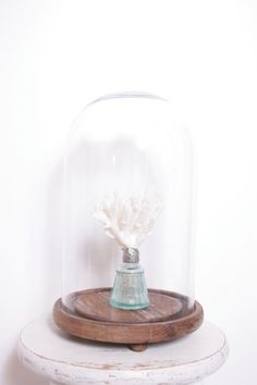 Beautiful Antique Medium Size Early 1900s Glass Dome Cloche Display with Wooden Base, Perfect for Curiosities