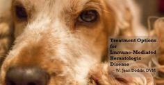 Dr. Jean Dodds' Pet Health Resource Blog | Immune-Mediated Hematologic Disease and Bone...