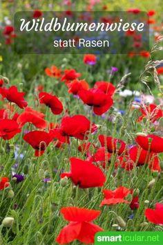 Der perfekte Rasen mag schön anzusehen sein, kostet aber viel Zeit und Energie…