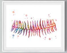 Teeth Watercolor Print Dental Art Dentist Poster Human Teeth Anatomy Stomatology Decor Clinic Wall D Dental Health Month, Dental Life, Oral Health, Dental Office Decor, Dental Office Design, Dentist Art, Dental Images, Emergency Dentist, Clinic Design