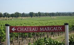 Chateau Margaux vineyards www.bcfw.co.uk Fine Wine, Wines, Vineyard, Around The Worlds, Neon Signs, Facts, Blog, Vine Yard, Vineyard Vines