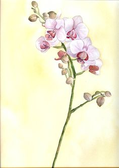 Watercolor orchid 9x12. I painted this at a watercolor workshop by Kory Fluckiger.