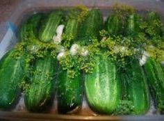 """Fermented Dill Pickles – Refrigerated """"Clausen"""" Type Recipe"""