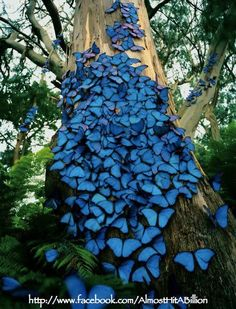 Hilarous Facts, Pictures, Quotes and Information at Internet: Wonderful Butterflies!!