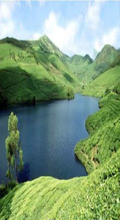 Tea garden & beautiful lake in Sylhet, Bangladesh Travel Tours, Travel And Tourism, India Travel, Bangladesh Travel, Amazing India, Amazing Nature, Outdoor Pictures, India Culture, Munnar