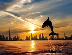 Dubai sunset and dolphins