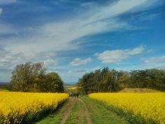 The Ridgeway near Ardington