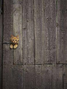 500px / Pocket tiger. by Roman Kozhukhov