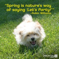 Like this if you and your pets are gearing up for spring!