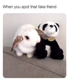 I ain't got time for dat! Animals And Pets, Baby Animals, Funny Animals, Cute Animals, Rabbit Pictures, Cute Pictures, Cute Baby Bunnies, Cute Babies, Rabbit Baby