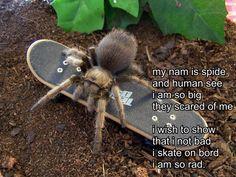 Tarantulas are nasty by RacieB on DeviantArt Cute Animal Memes, Cute Funny Animals, Cute Baby Animals, Funny Cute, Really Funny, Hilarious, Stupid Memes, Stupid Funny, Funny Memes