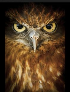 owl ♥ Love Animals? ♥ The leading causes of water depletion, deforestation, global warming, wildlife extinction, and ocean dead zones is due to animal agriculture for meat and dairy consumption.