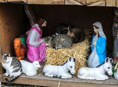 A Cat-Ivity Scene