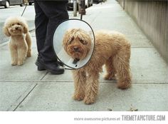 Scumbag Smiling Dog is happy to not have a cone of shame