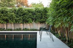 Use pleached trees or tall, thin plants  Pleached trees (where the foliage is trimmed to form a hedge) are ideal for small gardens as they let in light above and allow space for planting below. The pleached trees used here are the lush and dense Ficus microcarpa 'Hillii'. To their right is a planting of bamboo, ideal for narrow areas due to its tall, thin form