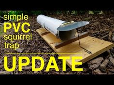 How to make ● a HUMANE PVC squirrel trap ●  UPDATE !!! - YouTube