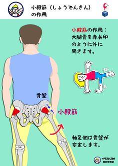小殿筋  小殿筋の作用は、 【大腿骨を外に開く】 です。 中殿筋と同じように、片足立ちの時の軸足の骨盤の安定にも関係します。 中殿筋と小殿筋の作用は、この2つの筋肉が重なってついてることからも分かりますが、かなり似ています。 解剖学的なボディイメージができてくると、これらの筋肉の違いが分かるようになりますが、最初はあまり区別しなくていいと思います。