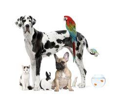 Pets  animali domestici