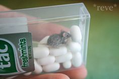Need a nifty idea for mini pet carrier? by ReveMiniatures on DeviantArt