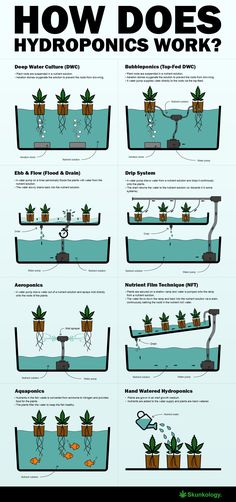 How does hydroponics work #hydroponicsinfographic #hydroponicstips #hydroponicsgardening