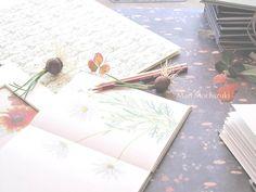 drawings by Mari Mochizuki, February 2015/スタジオから:季節の便り 2015年2月 マーガレットの素描、イタリア紙、庭の植物を用いた構成#望月麻里 mochizukimari.com